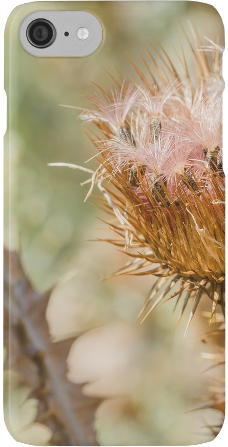 Cirsium Vulgare iPhone Case