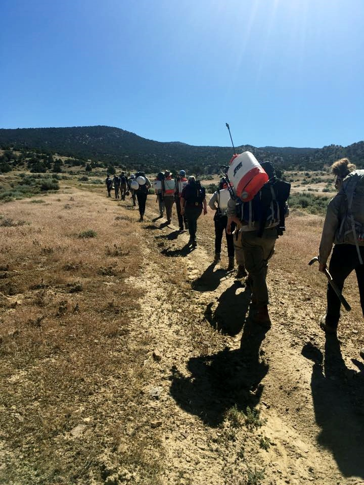A crew of ACE (American Conservation Experience) members and NPS Bio-techs beginning an arduous 5 mile hike...