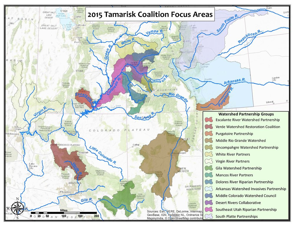 FIGURE 1. TAMARISK COALITION FOCUS AREAS FOR WATERSHED PARTNERSHIPS IN THE WESTERN UNITED STATES.