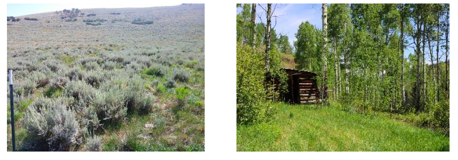 Figure 2. Rainfall varies on the ranch based on elevation and aspect, ranging from relatively dry sagebrush dominated western foothills (left) to higher elevation mountains (right).