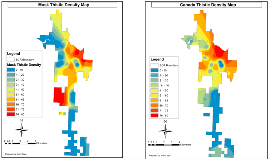 Figure 3. Distribution of musk thistle (left) and Canada thistle (right) within the ranch based on data collected from transects and prediction based on inverse distance weighting (IDW).
