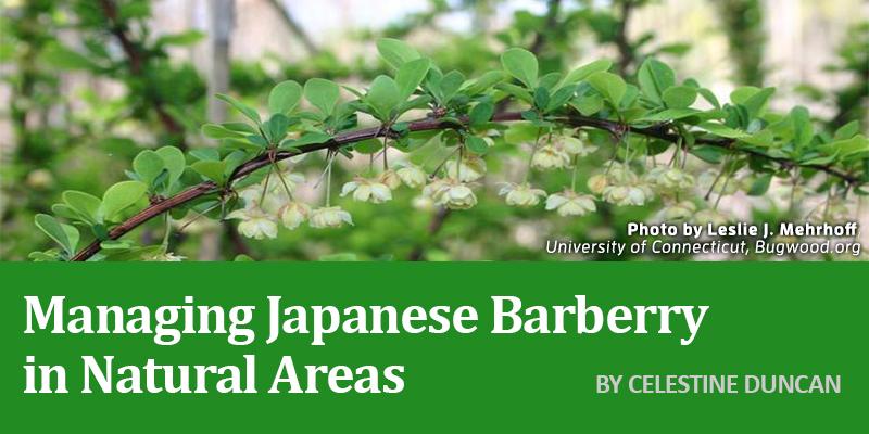 JapaneseBarberryBanner.jpg