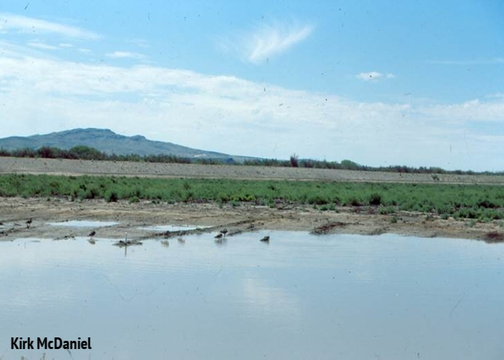 1990 : Flood irrigation following saltcedar removal (Unit 28).