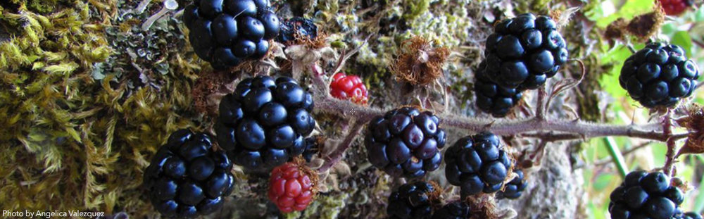 BlackberryBanner-Webpage.jpg