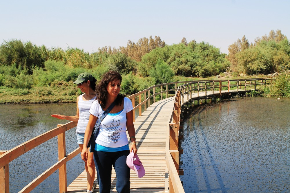 Azraq Wet Lands - Jordan