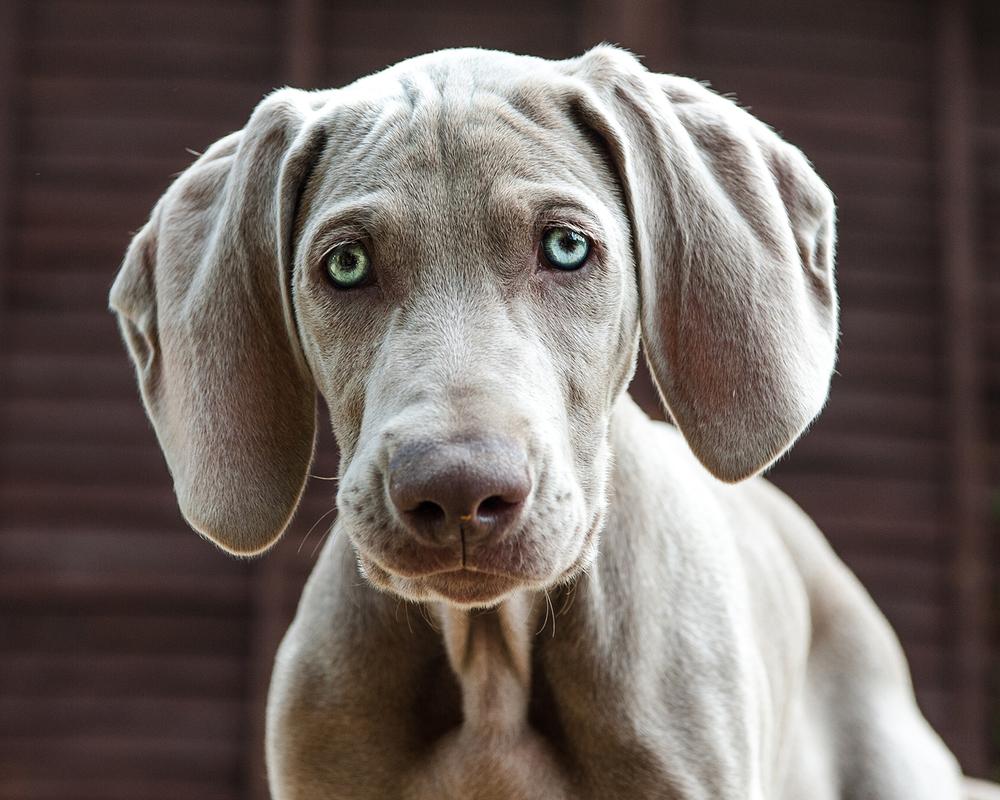 northampton dog photography