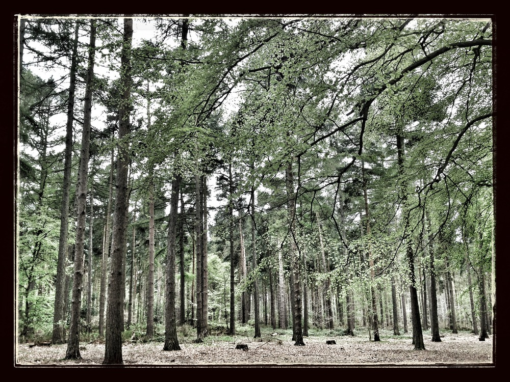 'Trees' - Northampton, 2013