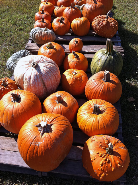 Pumpkins in Winterville