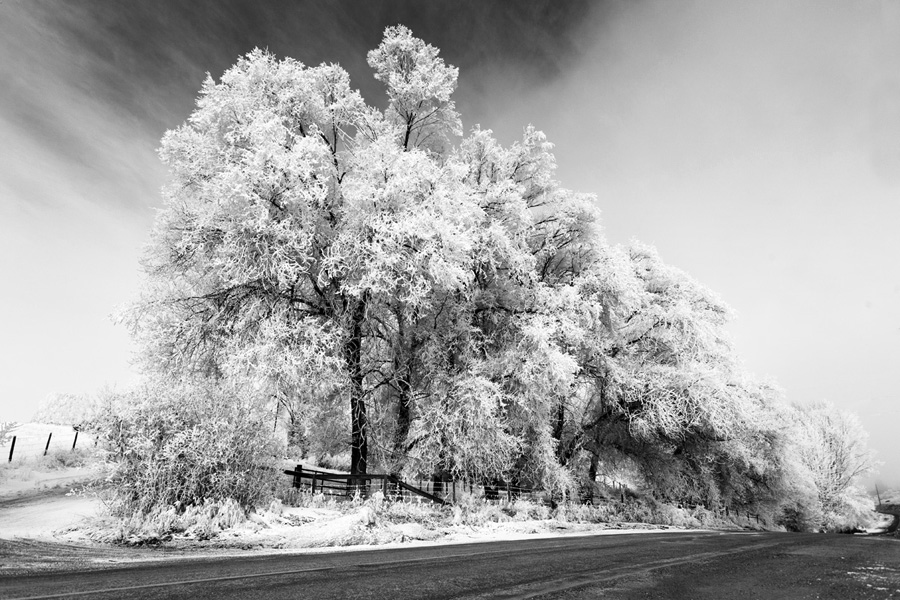vernon_winter4_900.jpg