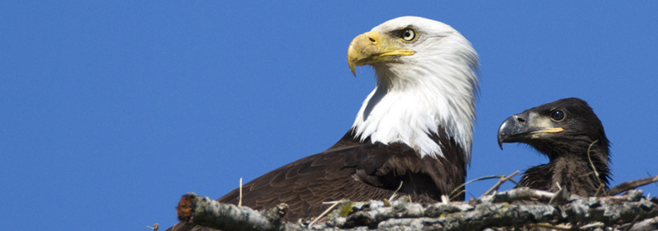 eagle1_thumb.jpg