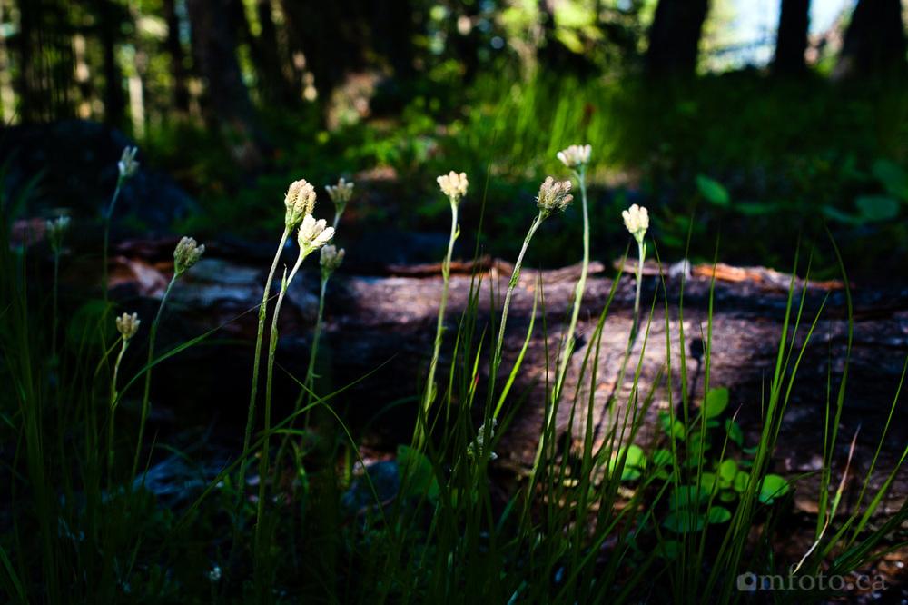 rose-swanson-hike-3129.jpg