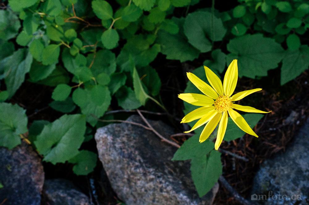 rose-swanson-hike-3143.jpg