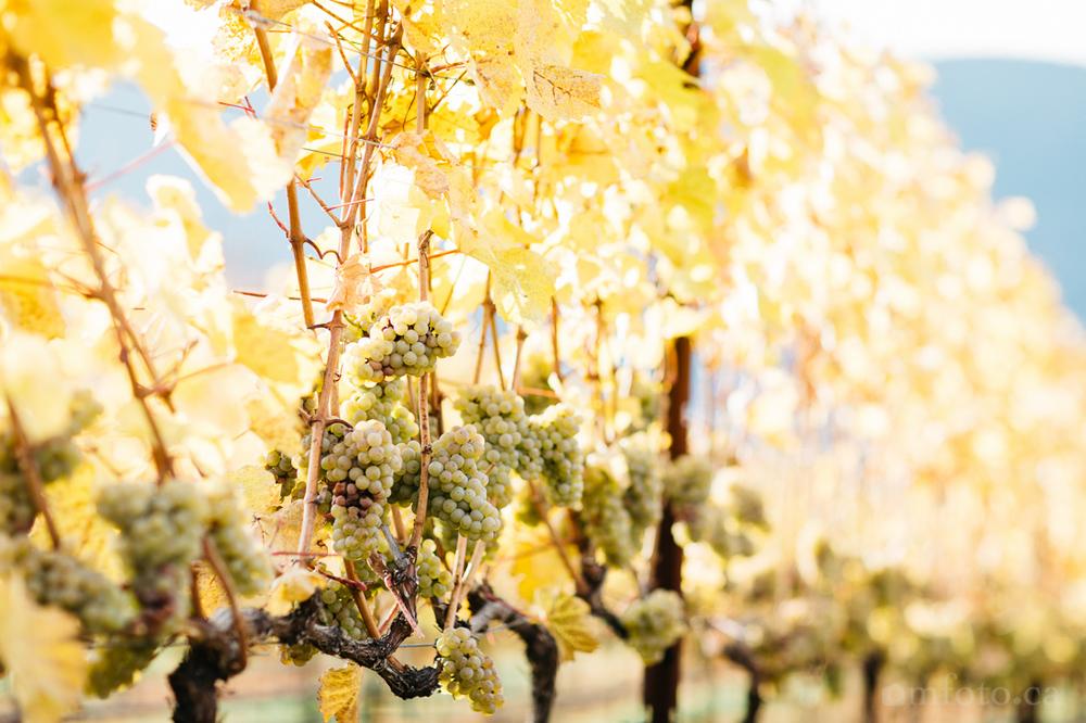 exnihilo-vinyards-7936.jpg