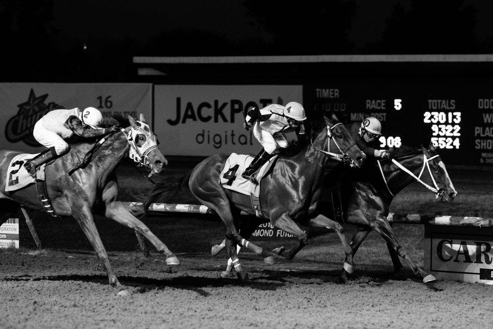 hastings_racecourse-0752.jpg