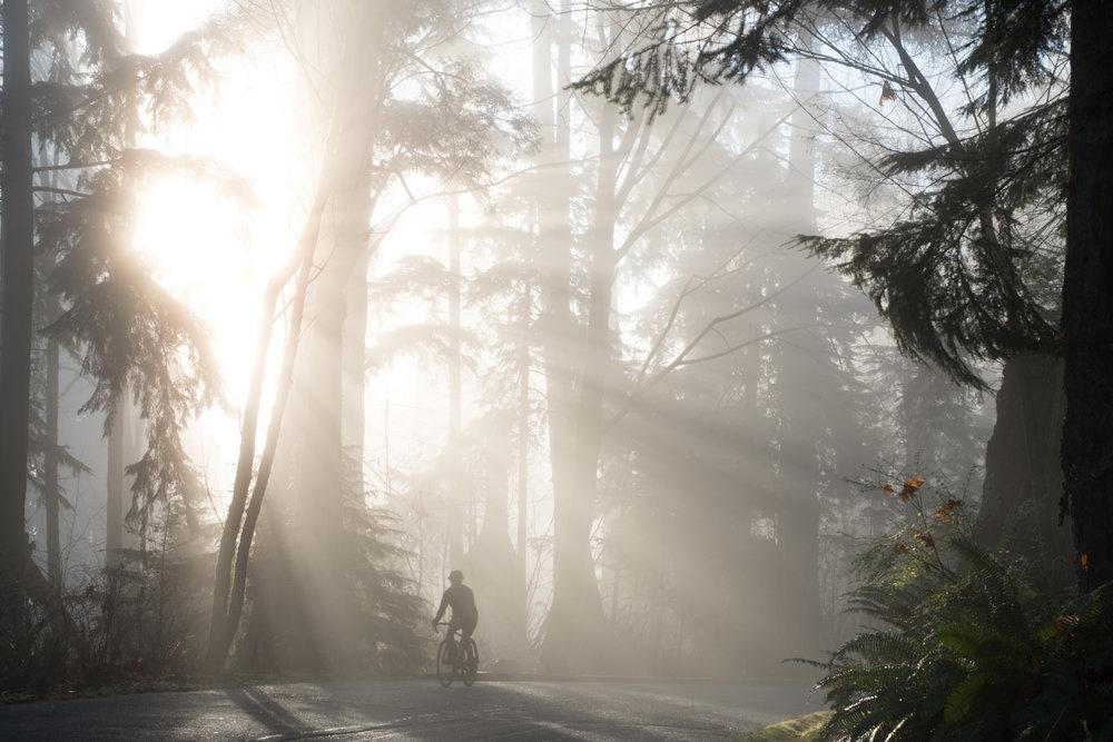 cyclist stanley park vancouver