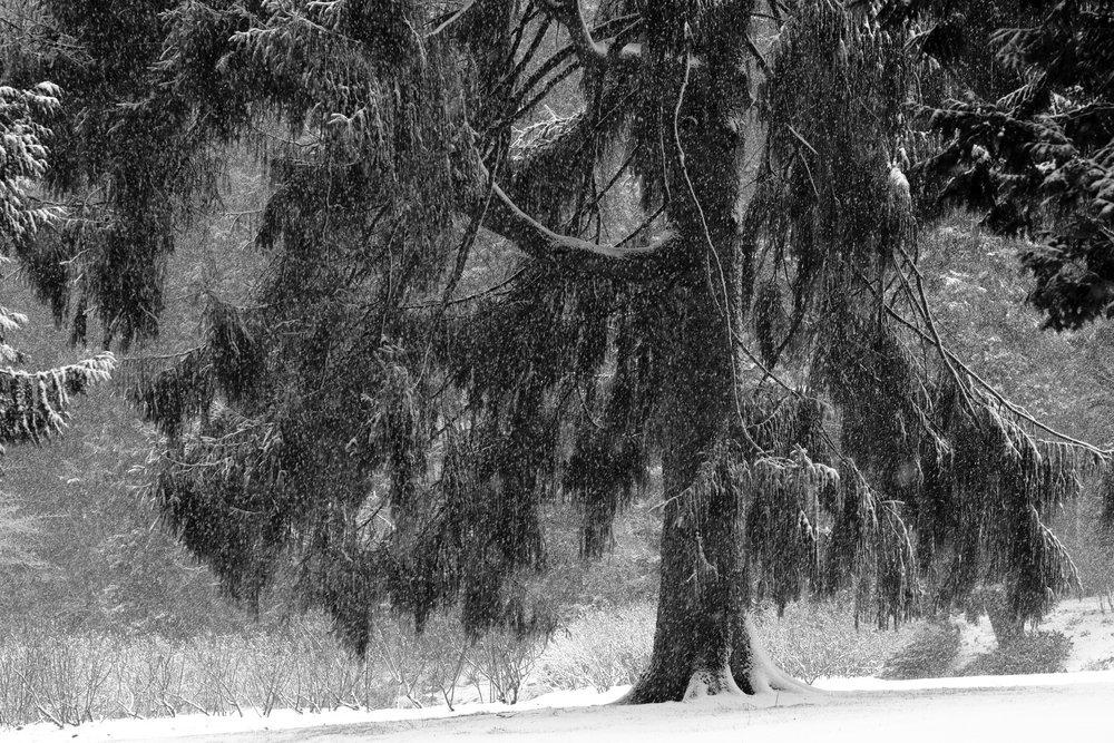 DSCF0092vancouver_snow_day.jpg