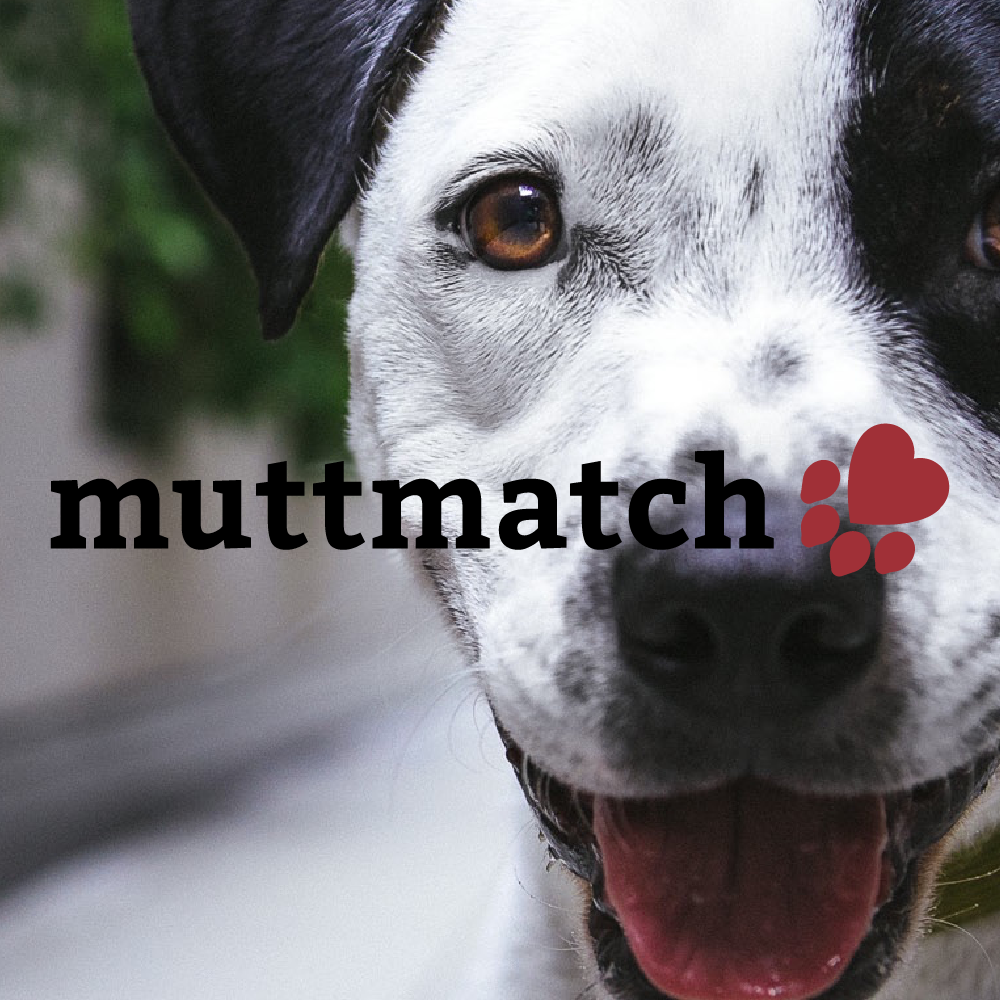 Muttmatch Pet Adoption Case Study