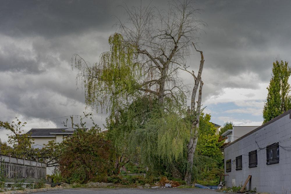 Jim-Roche-photo-Main Street Landscape.jpg