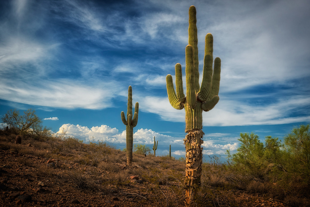 Phoenix Photographer Nathan Brummer Photography DSC_5545.jpg