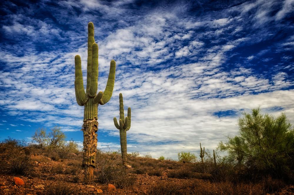 Phoenix Photographer Nathan Brummer Photography _DSC3440.jpg