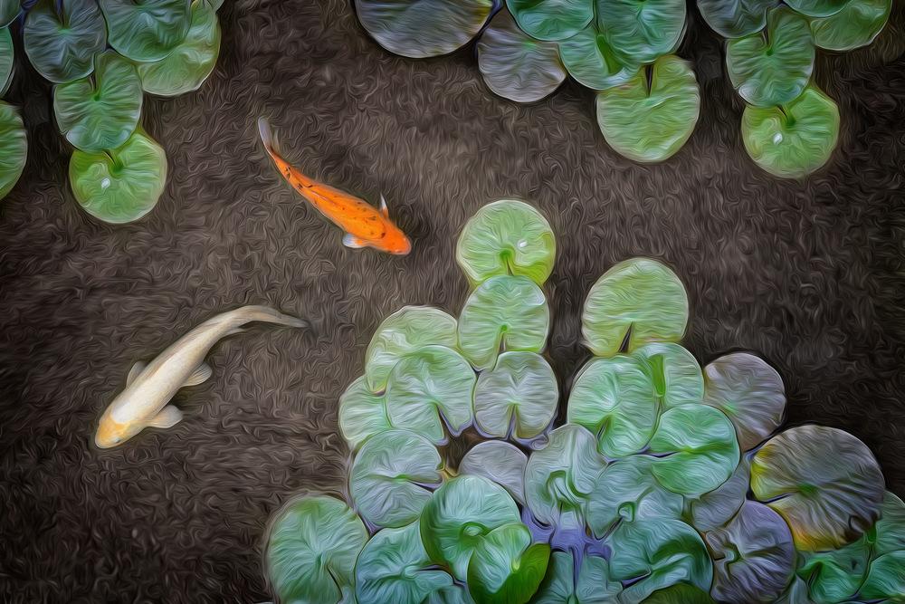 Phoenix Photographer Nathan Brummer Photography koi.jpg