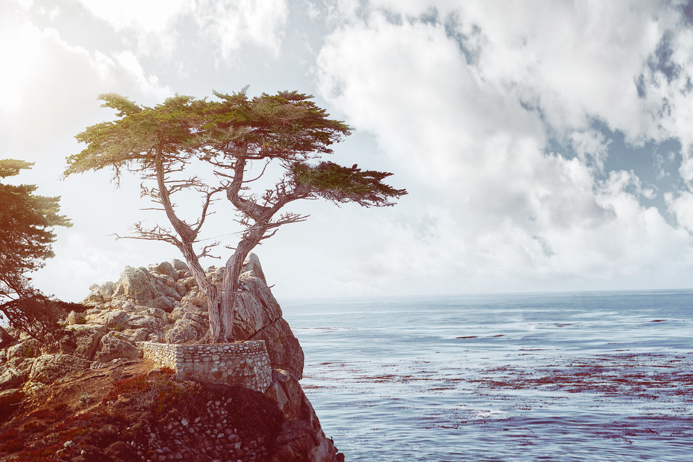 Phoenix Photographer Nathan Brummer Photography Carmel Lone Cypress