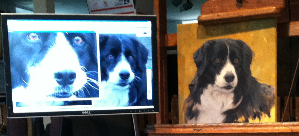 photoshop setups  border collie.jpg