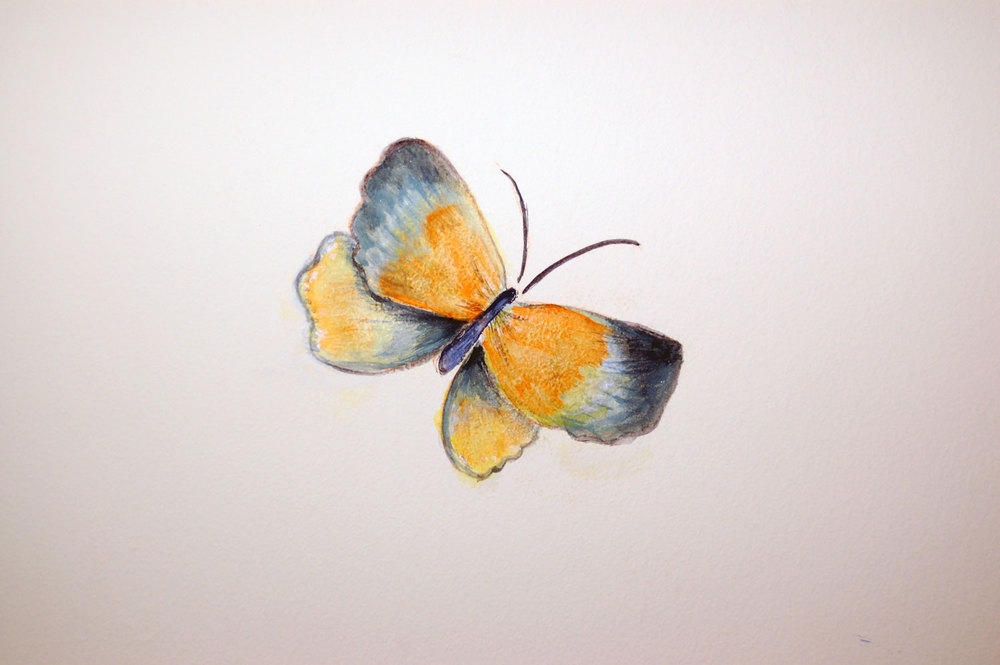 mural-butterfly-orange-andgrey.jpg