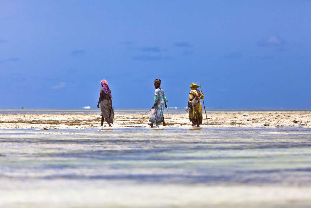 Ladies of Zanzibar, 2012. During the midday low tide in Zanzibar, Tanzania, locals go out and pick up leftover seafood from the water in addition to harvesting seaweed. This opens opportunity for these local women given that the tide is only low for a few hours.