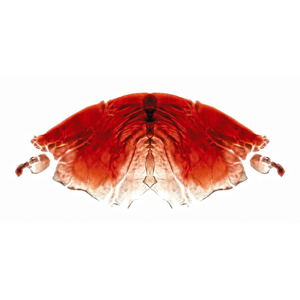 16. Heterocera ūnus.jpg
