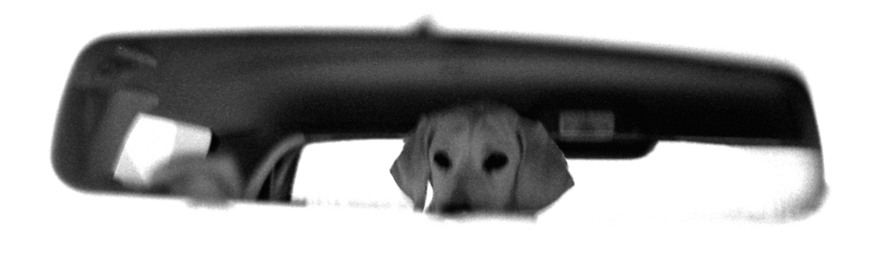 1997, Boulder, Rearview puppy.jpg