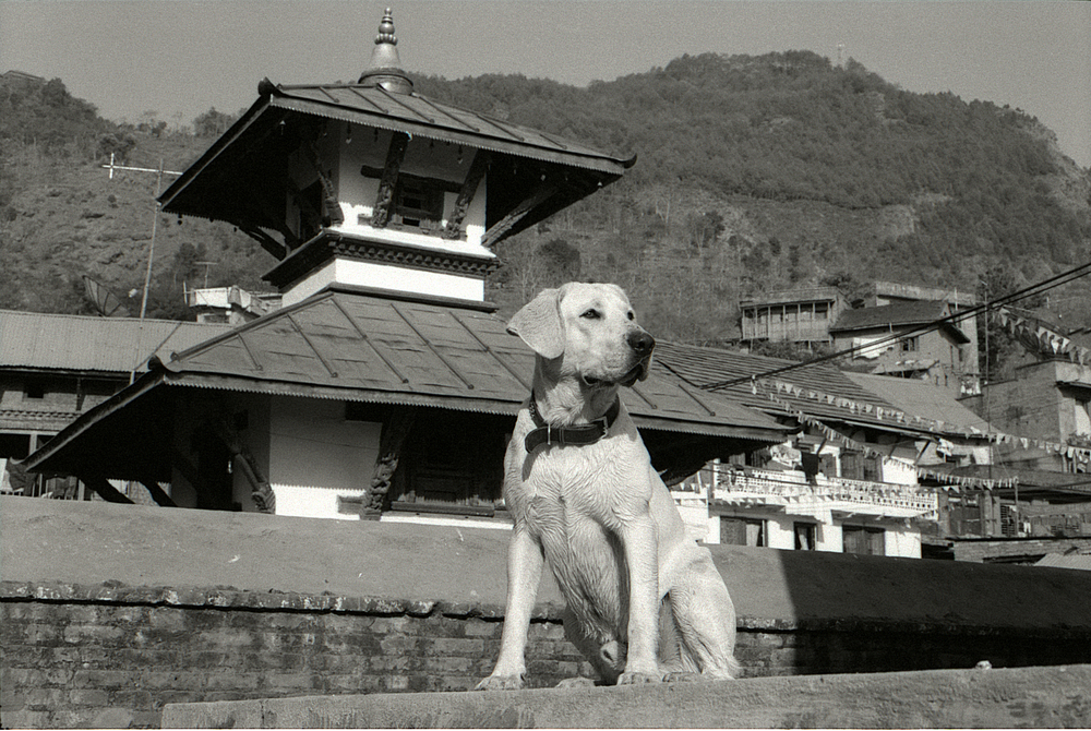 When Orville was nine months, he traveled to the Himalayan Kingdom of Nepal.