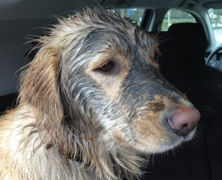 After an accidental rinse when Roo chased a cat into a cleaner part of the filthy stream.