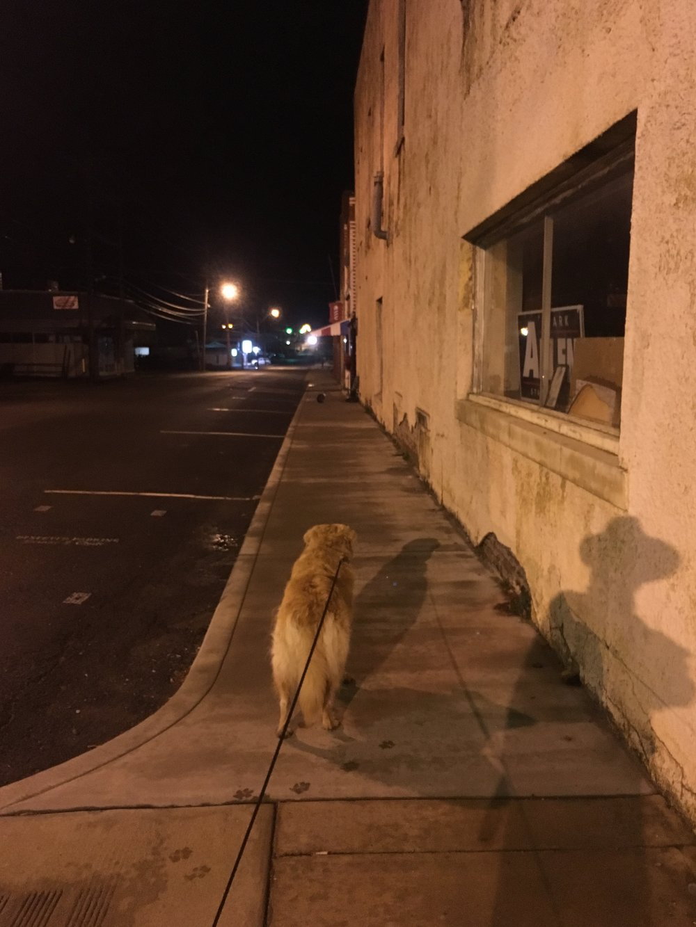 This photo of Roo looking at a cat in the street is unrelated to this, but it's all I have.