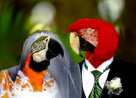 Parrot-Wedding.jpg