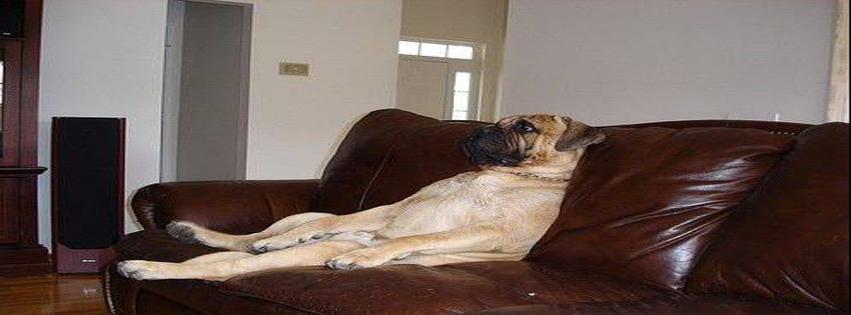 1133-dog-watching-tv.jpg