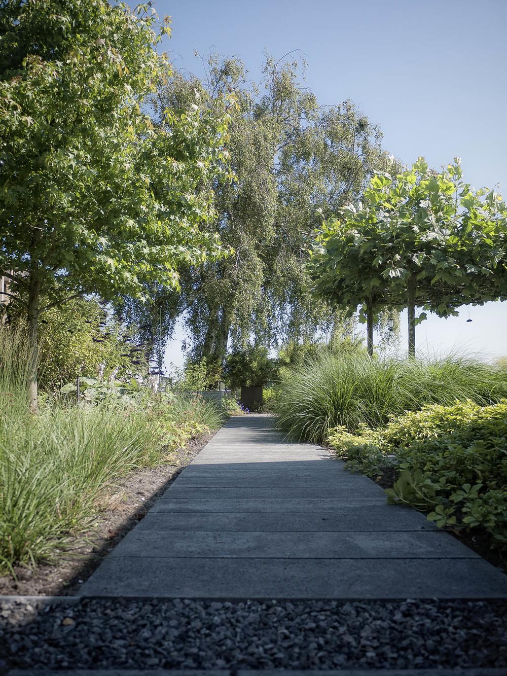 Tuinontwerp moderne tuin
