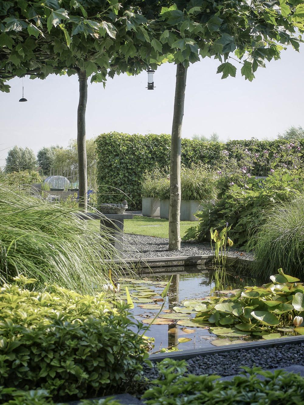 Tuinontwerp moderne tuin met vijver