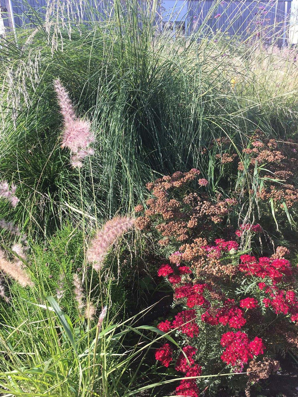 Tuinontwerp grassen