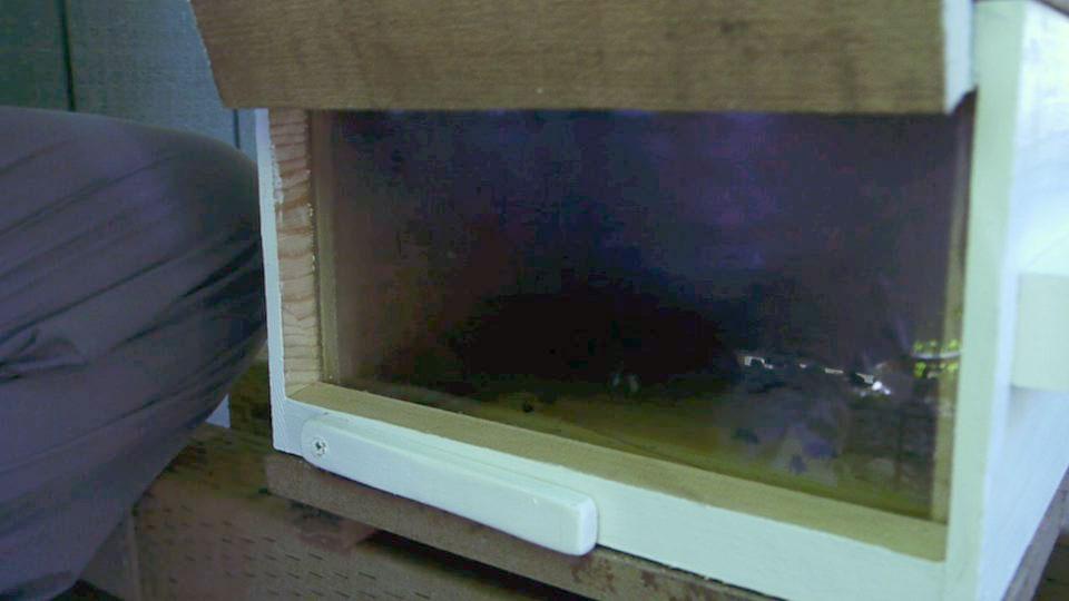 hive-box