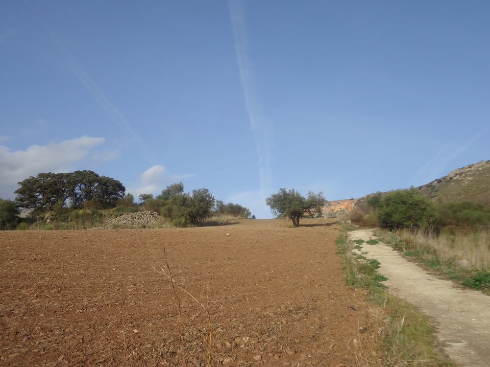 Most of the olive trees have been harvested, the soundscape being the sound of electric tree shakers - sounds a bit like a power saw! Some groves and more open fields are then ploughed, mainly for vegetable planting!