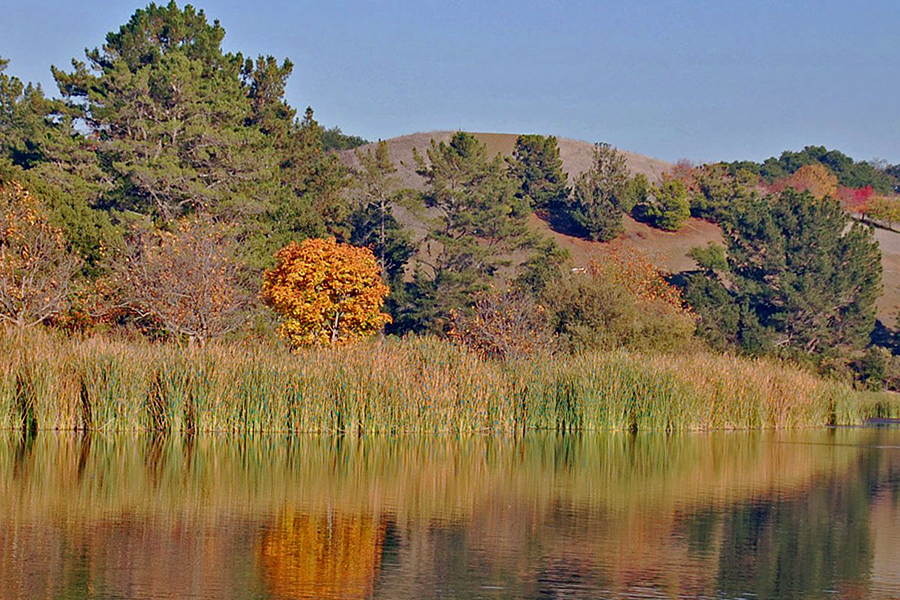 Bronda Lake shore