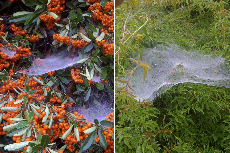 Sheet and funnel webs