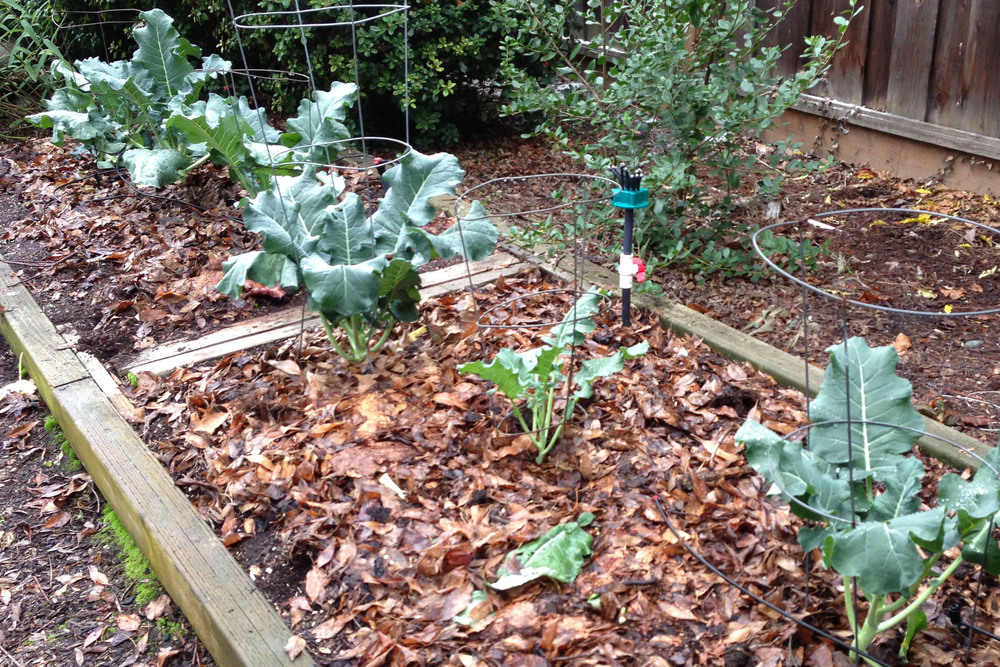 November Broccoli