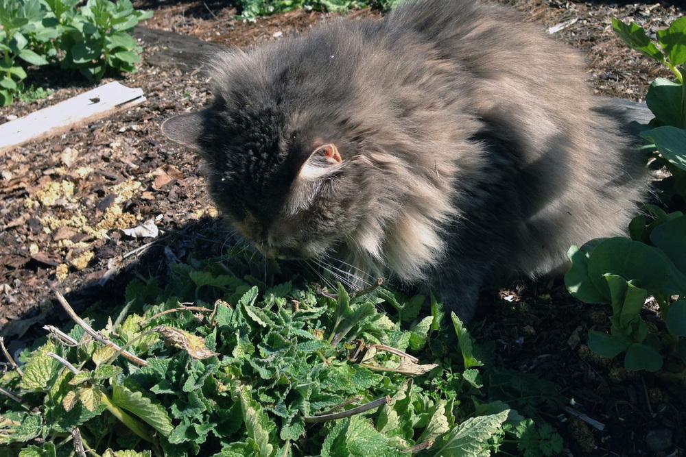 Ella and catnip
