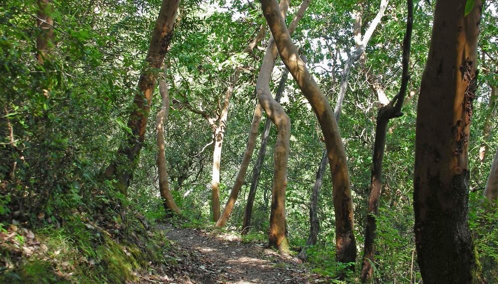 Foothills Park trail