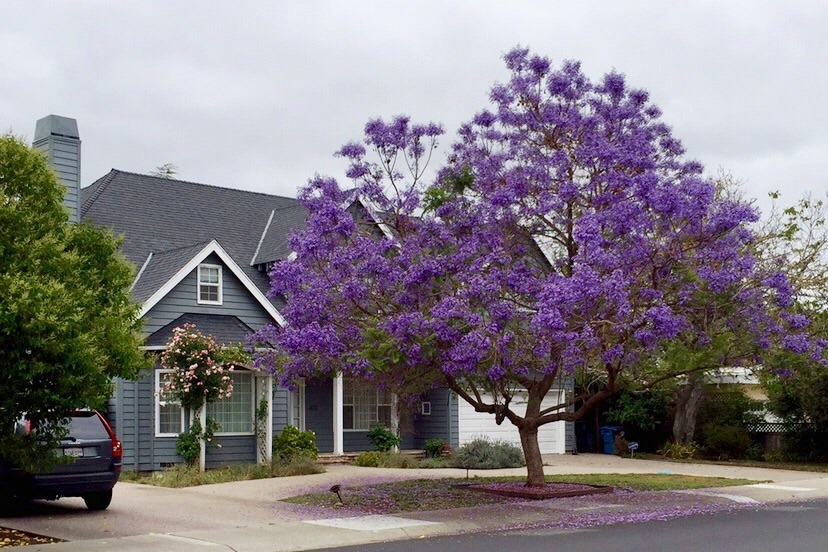 Violet rain begins