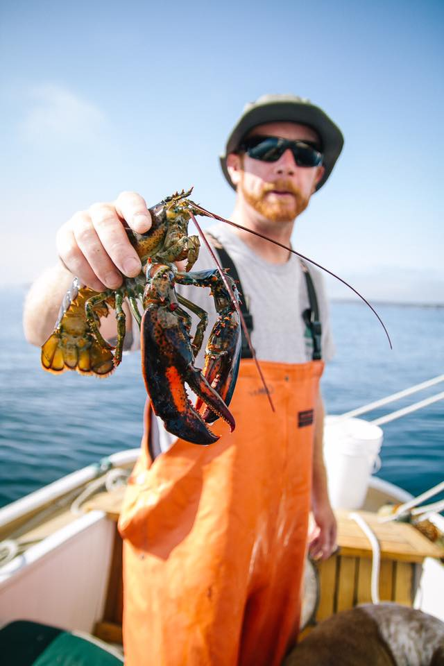 Captain Nate has found a lobster in a trap!