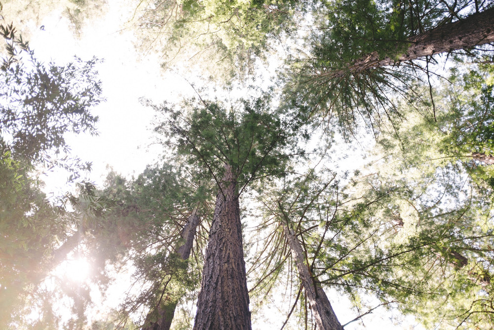 Hendy Woods Scout Folks Web-37.jpg