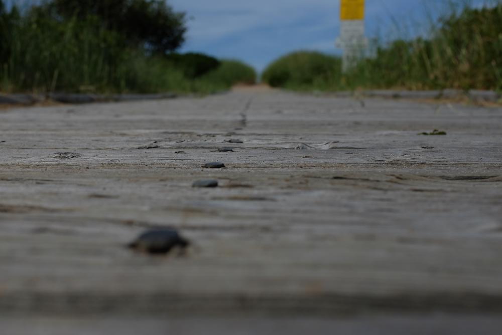 at Melmerby Beach, NS